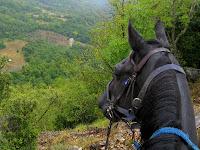 Maremman Horse: Tango