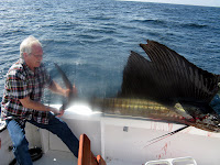 Duane's Marlin, Caught in Puerto Vallarta