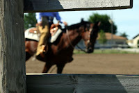 Reining Horse through Fence