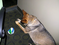 Zada Chewing on a Bone at the Office