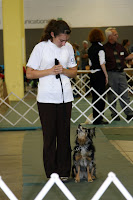 Tasha & Kiah (a Mini Aussie) in Obedience