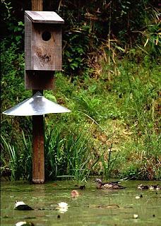 Billy Easy Wood Duck Nesting Box Plan Wood Plans Us Uk Ca