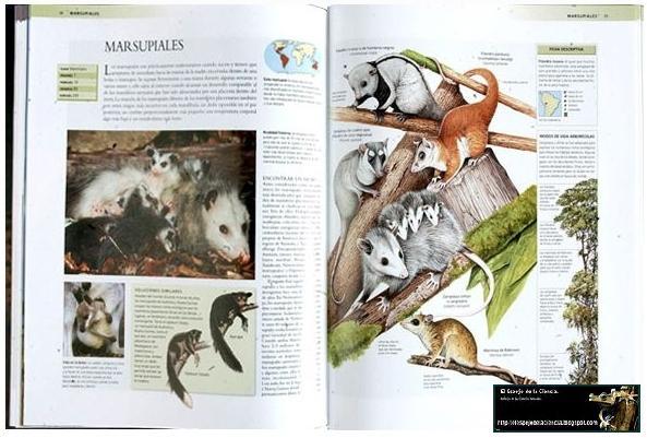 El Espejo de la Ciencia.: Enciclopedia de los Animales.