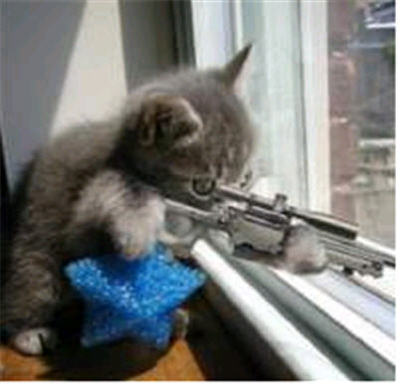cats with guns. funny cats with guns pictures.