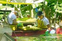 Planta empacadora de bananos en Coyoles,Honduras