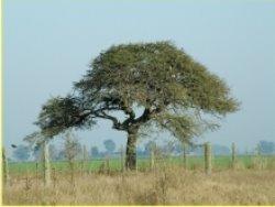 ¡un árbol que florece pájaros!