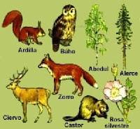 mUnDo NaTuRaL Regiones Naturales en Mxico