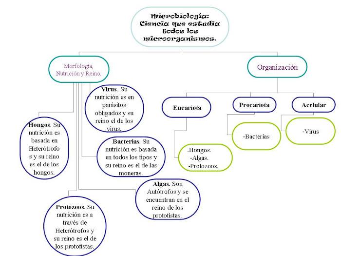 Caracteristicas de los microorganismos
