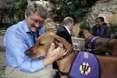 Dog Trained To Sense Panic Attack