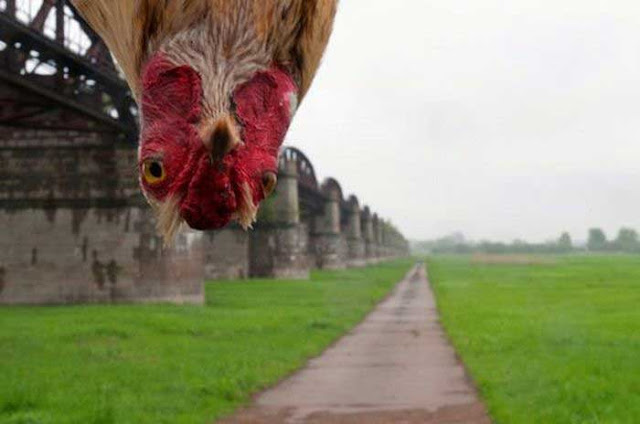 http://1.bp.blogspot.com/_f98opUNuVXc/TQpD0hTSxMI/AAAAAAAAUjc/S4jaz-CDnNg/s400/Australian%2Bchicken.jpg