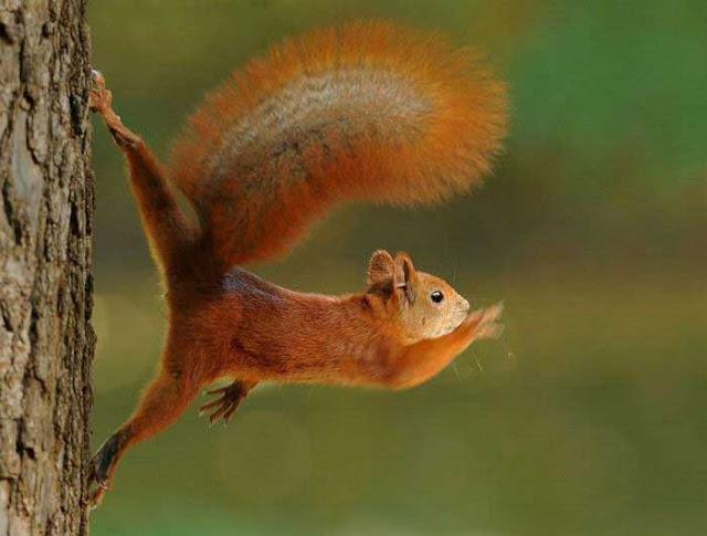 http://1.bp.blogspot.com/_f98opUNuVXc/TSIyz_2tAQI/AAAAAAAAU5s/YEPcufW3WXo/s400/Squirrel.jpg