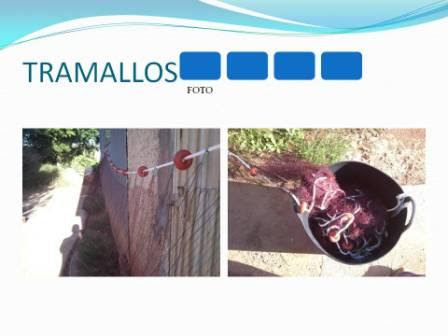 FRABRICANTES DE TRASMALLOS