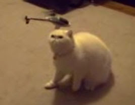the cat curious to rc helicopter images