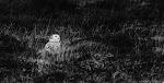 International Wildlife Photographer of the Year