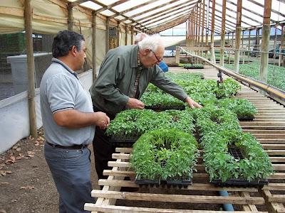 Plantas de viveros for Viveros en quillota