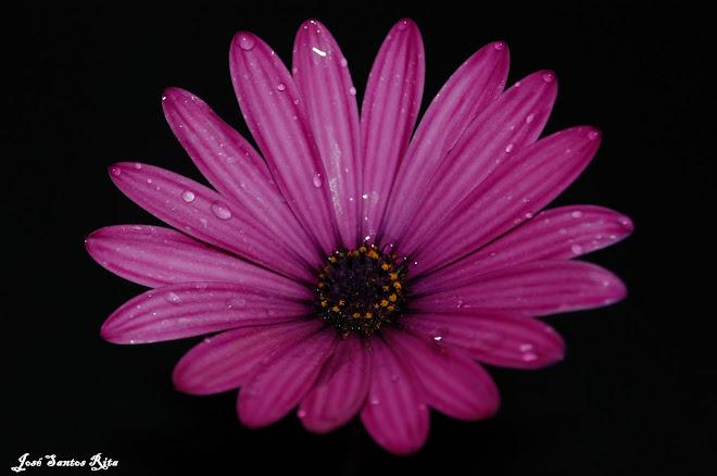 Flor de Junho