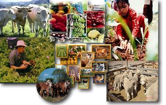 external image 001_agricultura_y_ganaderia_large1.png