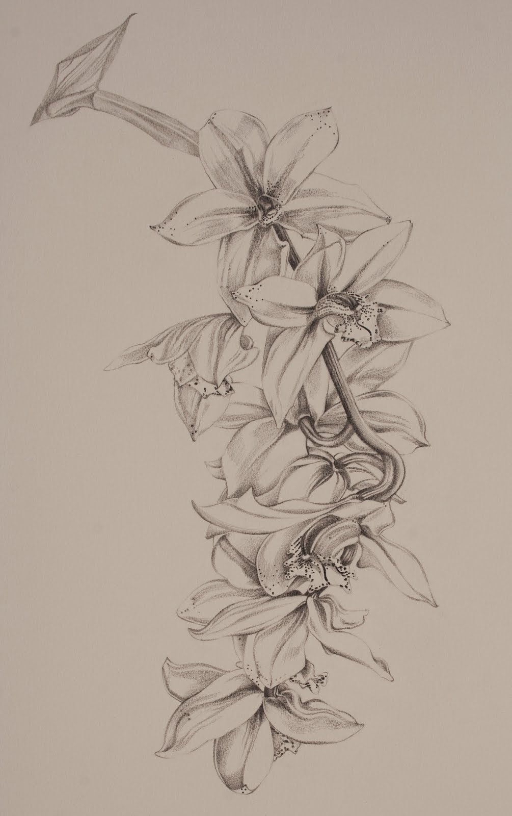 Orchid Line Drawings http://www.justineward.com/p/works-on-paper.html