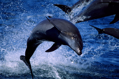 I occasionally see dolphins at Rehoboth.  But these dolphins aren't they.