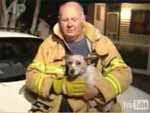 Perro valeroso rescata a cuatro gatitos de incendio
