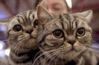 (15/01/011) Animales de compañía como terapia para enfermos o presos