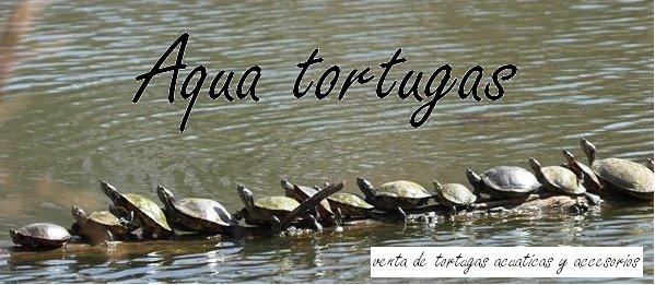 Aqua tortugas