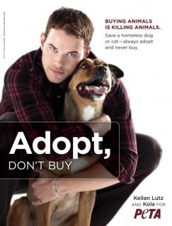 no compres adopta♥
