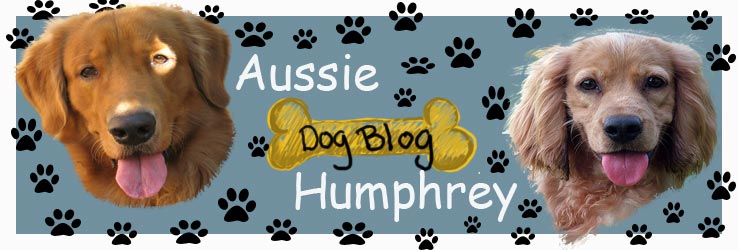 aussie and humphrey