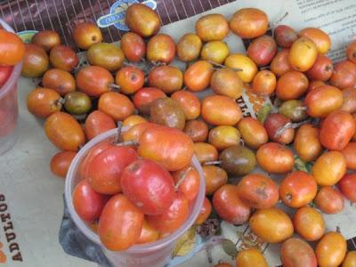 Rarezas ciruelas y pepinos for Ciruela santa rosa