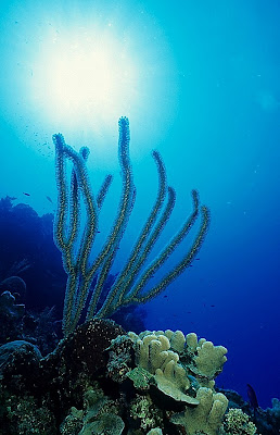 Caribbean reef scene