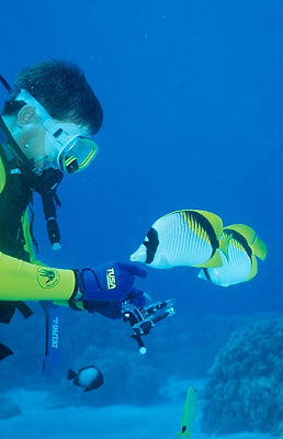 Jerry with Lined Butterflyfish