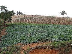 Produção agrícola nacional