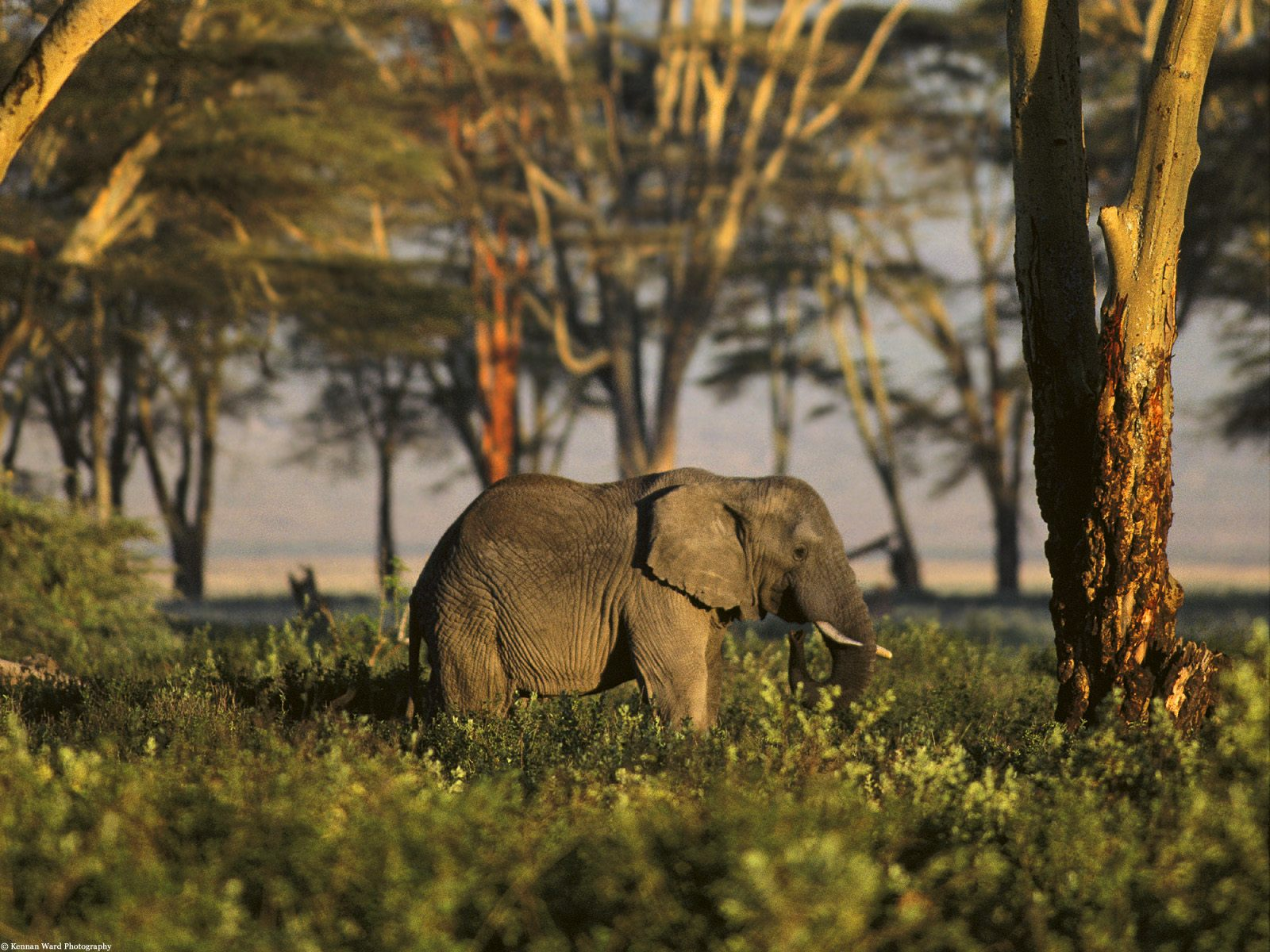Free Wallpapers: African Animals Wallpapers