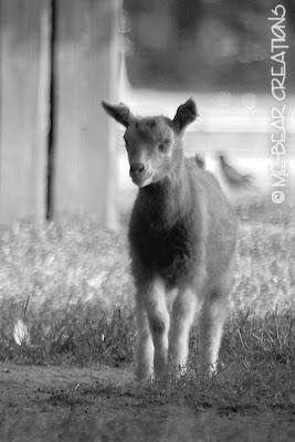 fotografie, natuur, dieren, boerderij, kinderboerderij, photography, nature, farm, animals