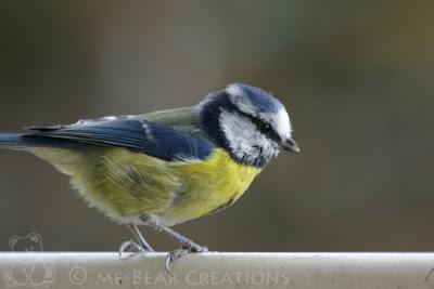 photography, nature, autumn, fall, great tit, tit, titmouse, bird, srl, dsrl, pentax, ist.dl, fotografie, natuur, herfst, najaar, koolmeesje, meesje, vogel