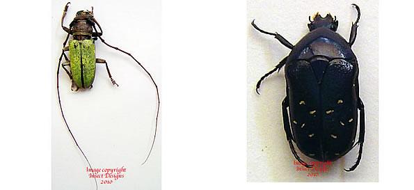 subfamily Cetoniidae - Dictionary Definition : Vocabulary.com