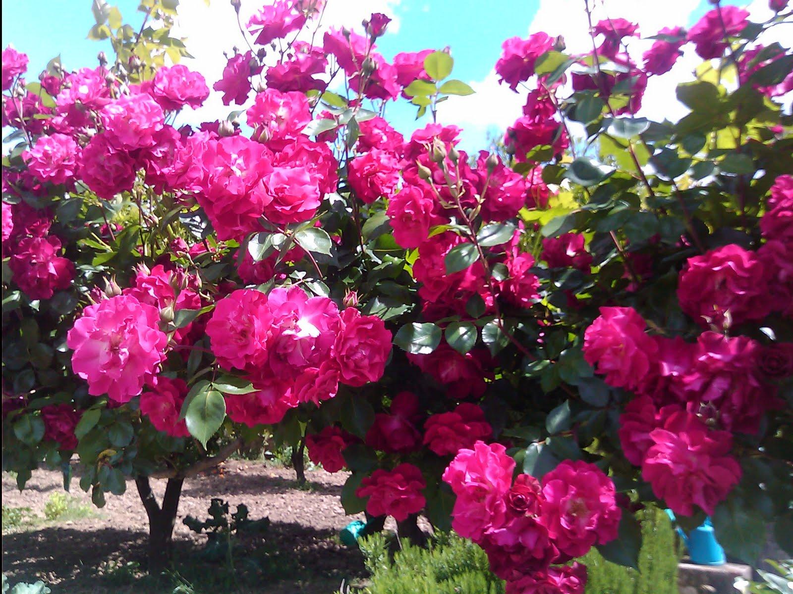 flores jardim secreto:Passageiro 16: O meu jardim secreto