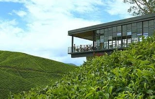 Tea, everywhere: The Sungei Palas Tea Centre overlooks Gunung Brinchang.