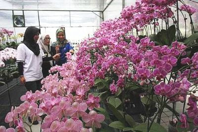 Full blossoms: Genting Highlands in Pahang is not just known for its theme park and casino as it is attracting tourists to an orchid farm and a strawberry farm in its locality.