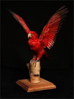 Le Poulain Rouge