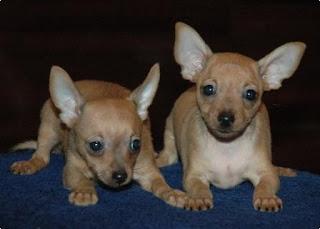 Породы маленьких собак с фотографиями