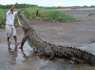 Jaco Costa Rica Crocodiles