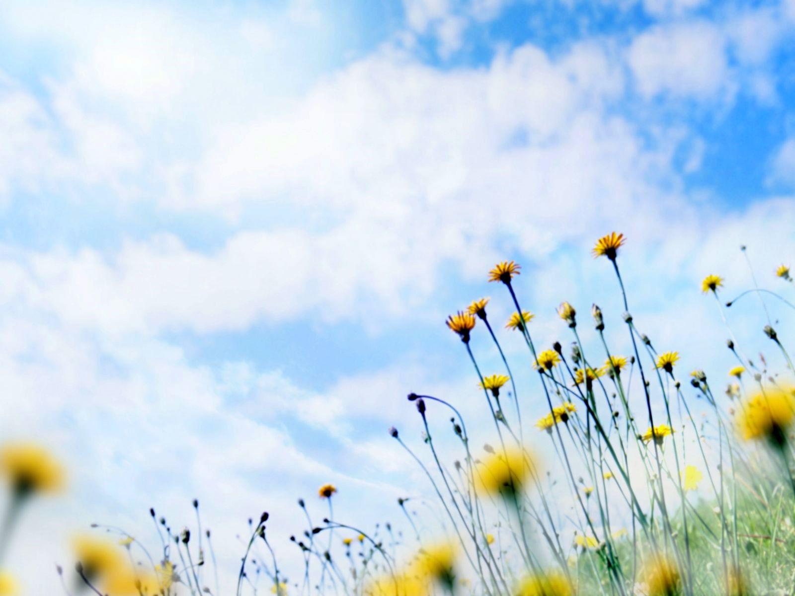 http://1.bp.blogspot.com/_fTSPcnSTTyc/TPR6TM3SowI/AAAAAAAADTI/qRqlz9IW-e4/s1600/Wallpaper_Windows_7_-_Meadow_flowers.jpg