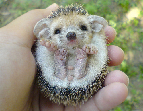 Edge Of The Plank: Cute Animals: Baby Hedgehogs