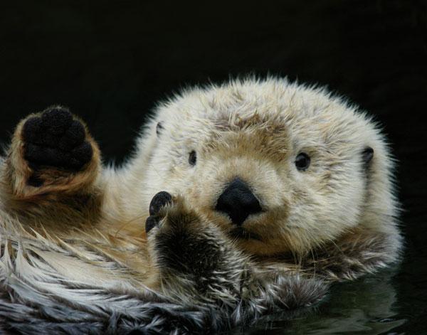 cute-sea-creatures-album-otter-101011