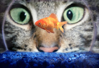 Do Cats Eat Goldfish? How To Protect Goldfish From Cats?