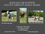 Chevaux Arabes Barbes Elevage des Ruettes La Grange du Bois 85480 Thorigny  Tél 06 60 93 27 92