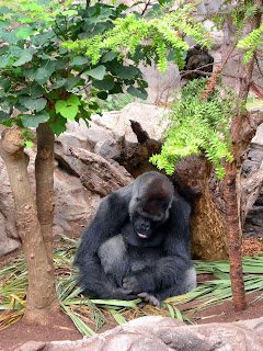Gorilla at sleep