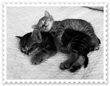 [kitties-n-blueberries-059.jpg]