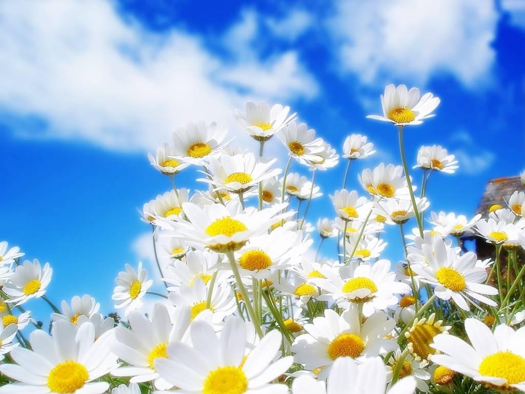 Zahra si bunga